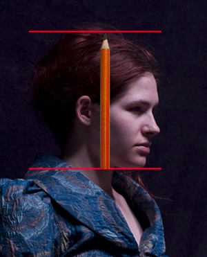 Portrait drawing tutorial: measuring the height of the head