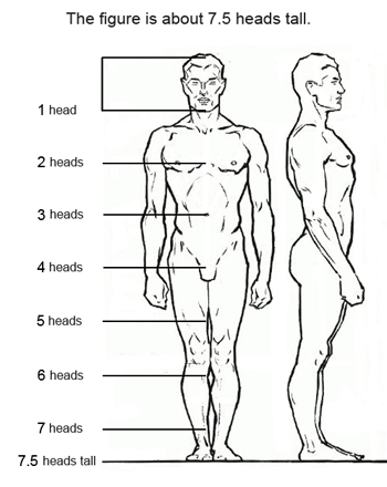 7 Figure Drawing Proportions To Know