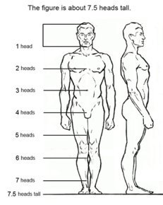 Figure drawing proportions
