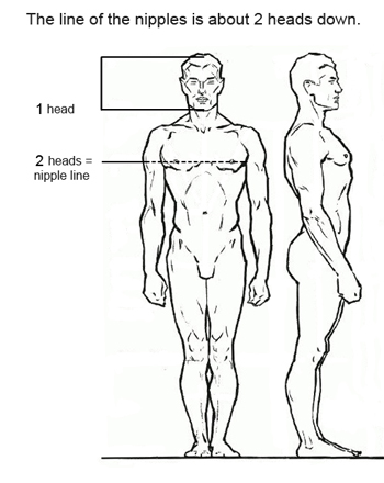Drawing proportions