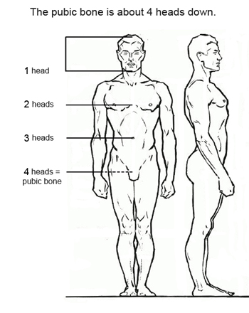 Human figure drawing proportions