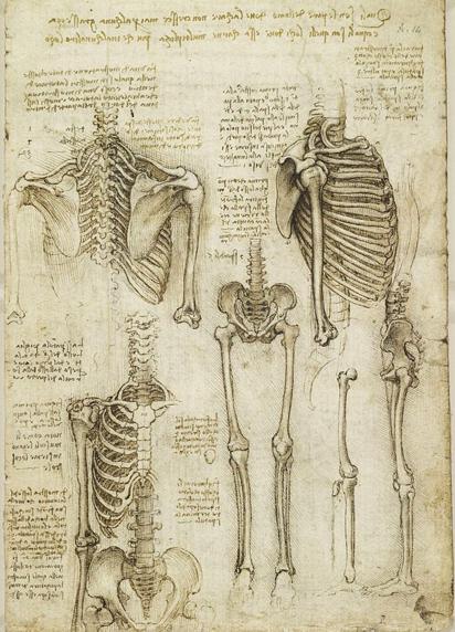Contour Line Drawing Leonardo Da Vinci : Leonardo da vinci drawings
