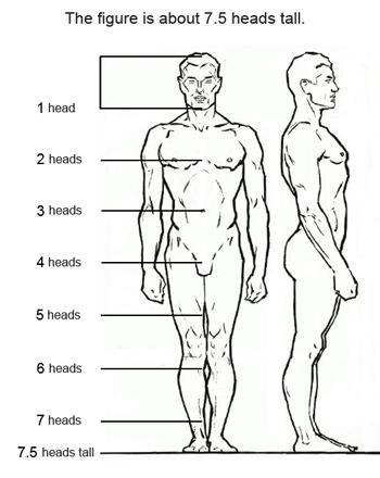 Proporciones de la figura